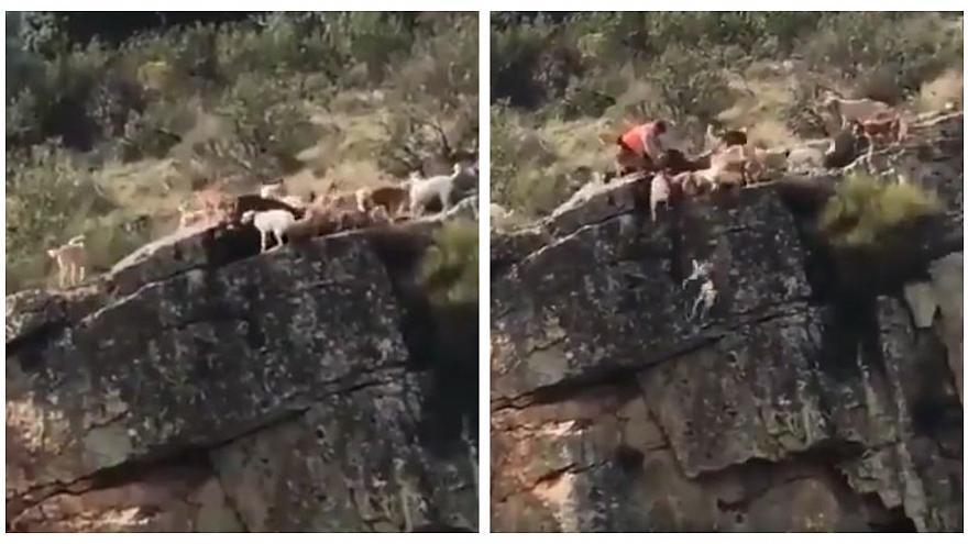 Cani da caccia cadono nel dirupo la tragedia durante la caccia