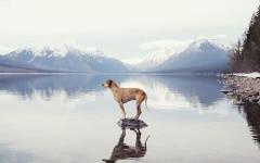 Maddie cane equilibrista: una vera star avventurosa