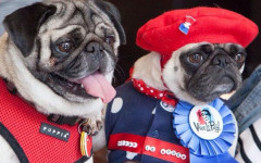 Minnie e Max the Pug: i carlini più famosi del web!