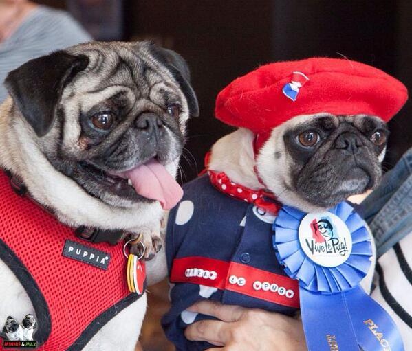 Minnie e Max the Pug: i carlini più famosi del web!