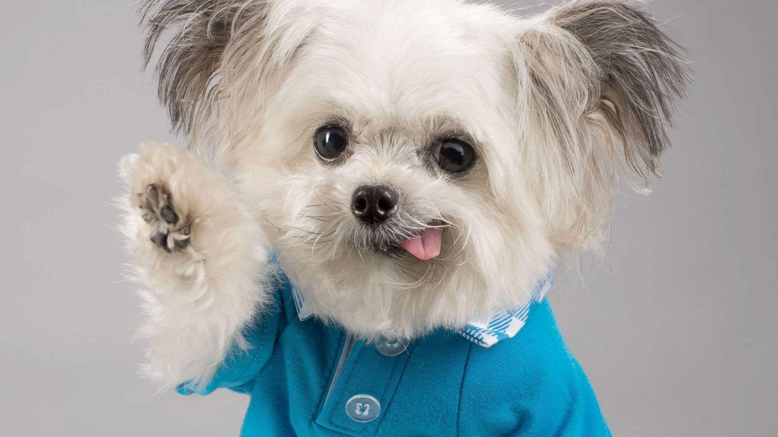 Nobert the dog: il therapy pet più famoso del web!