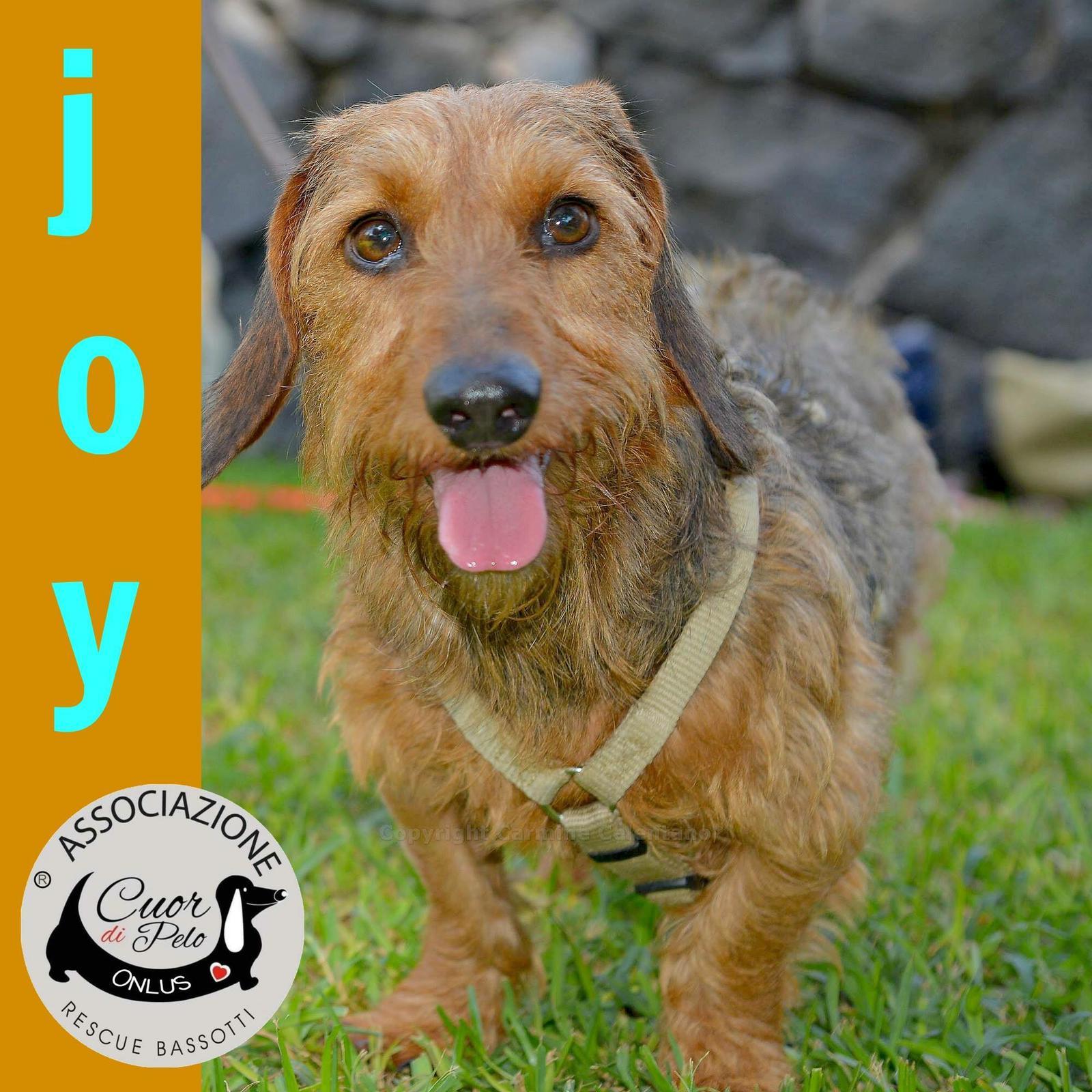 Joy cerca casa, aiutiamolo: appello per adozione