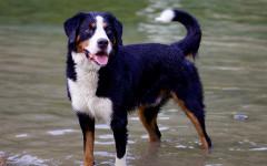 Secretos que no sabes de tu perro: datos interesantes