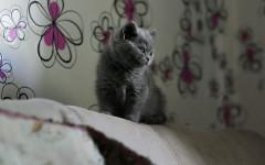 Fiori di Bach per gatti: lozioni che li aiutano a stare tranquilli