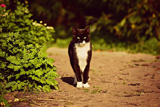 Kidney stones in cats: What you should know
