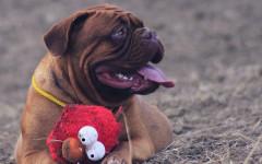 Disturbi gengivali nei cani: cause e rimedi