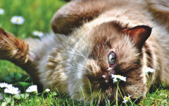 Gatos perciben los cambios climáticos: meteorólogos caseros