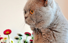 Gato come del suelo: un comportamiento peculiar