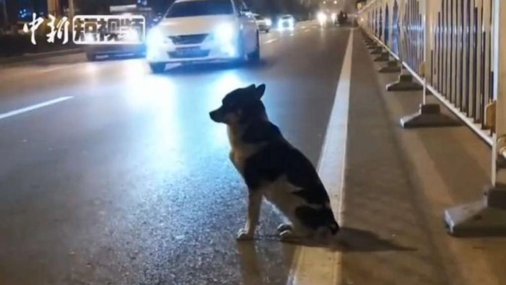Cane aspetta proprietaria nel luogo dove è scomparsa