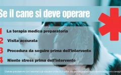 Infografica: consigli se il cane si deve operare
