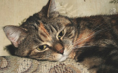 Cat vaccinations: stay up-to-date with the cat vaccinations