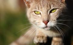 Vaccinazioni gatto: quali sono e quando farle