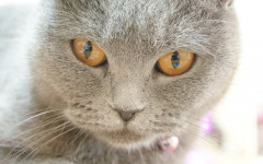Poisoned cat: how to save a poisoned cat
