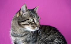 Gatti domestici stressati per colpa dei padroni: vediamo perché