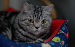 Cambiamenti abitudini nel gatto: quali sono le motivazioni?
