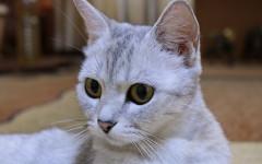 Insegnare nome al gatto: vediamo insieme come fare