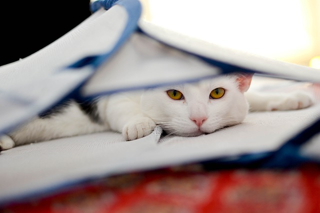 Cat is sich: how to tell if your cat is sick
