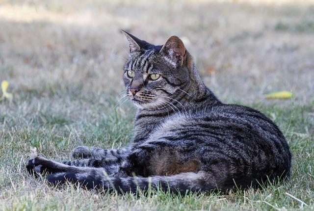 Eliminar pis de gato: un desagradable olor