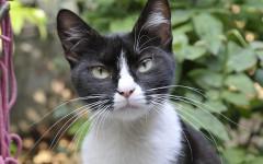 Sindrome da abbandono nel gatto: tutto quello da sapere