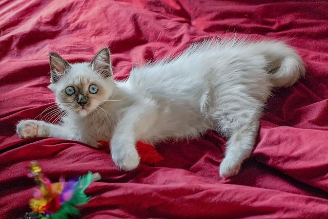 Cómo jugar con un gato: consejos para compartir