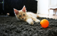 Changes in cat behavior: What could be Causing Them?