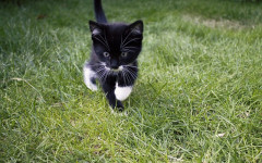 Giocare con il gatto all'aria aperta: come fare?