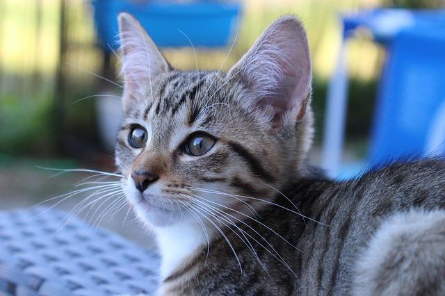Gato te sigue: conoce el comportamiento de tu mascota