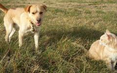 Cane insegue gatto: come evitare questa situazione spiacevole