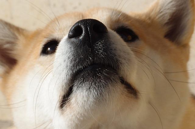 Cani si grattano naso: perché lo fanno?