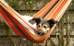 Changes in Dog Behavior: what is causing them?