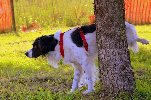 Perros levantan la pata al orinar: ¿por qué?