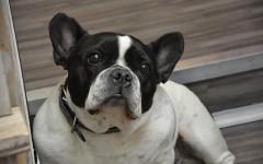 Autismo nei cani da vaccino: fake news o triste verità?