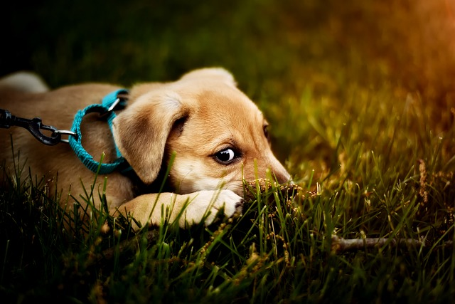 Why Dogs bite Leash and what to do About it