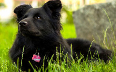 How to Teach a Dog His Name: What you should do