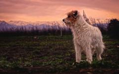 Vaccinazioni dei cani: obbligatorie? Utili? Ecco i consigli