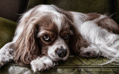Gum disease in dogs: causes, symptoms and treatment