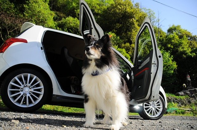 Road trip with your dog? Here's what you should know