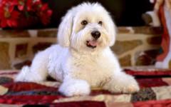 Cibo che allunga vita dei cani: di cosa si tratta?