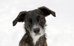 Dogs and cold: mistakes to avoid and what to do