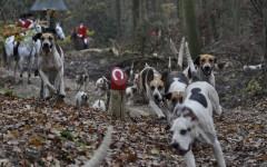 Cani da caccia cadono nel dirupo: la tragedia durante la caccia