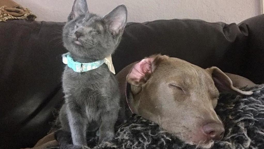Gatto cieco vede grazie a un cane guida: bellissima amicizia