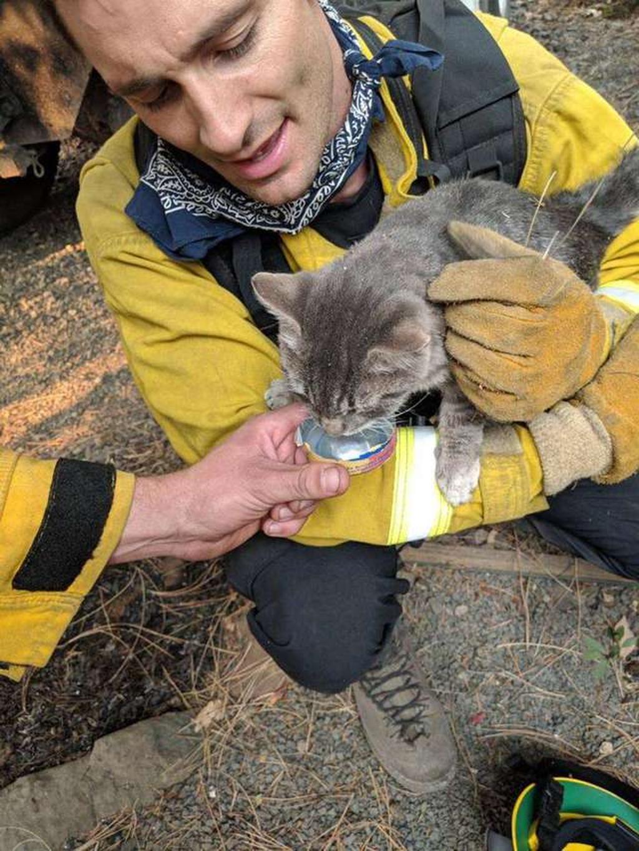 Un gatto salvato da incendio diventa un amico inseparabile del vigile del fuoco che l'ha portato in salvo. L'incidente si è verificato in California,