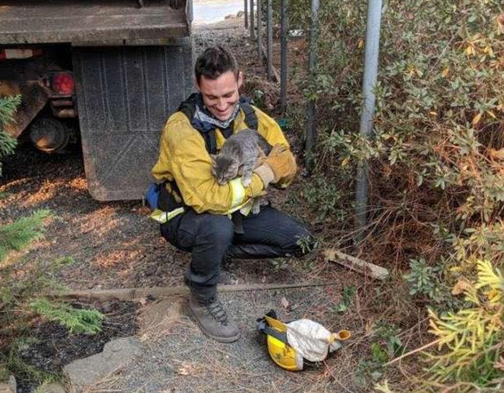 Gatto salvato da incendio diventa amico del soccorritore