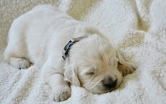 Dog's sleeping habits and what they mean