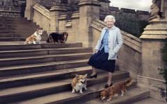 Holly il corgi della regina Elisabetta