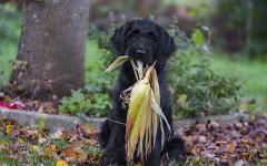 Allergie alimentari nei cani: ecco come riconoscerle