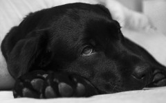 Illness in dogs: types and examples