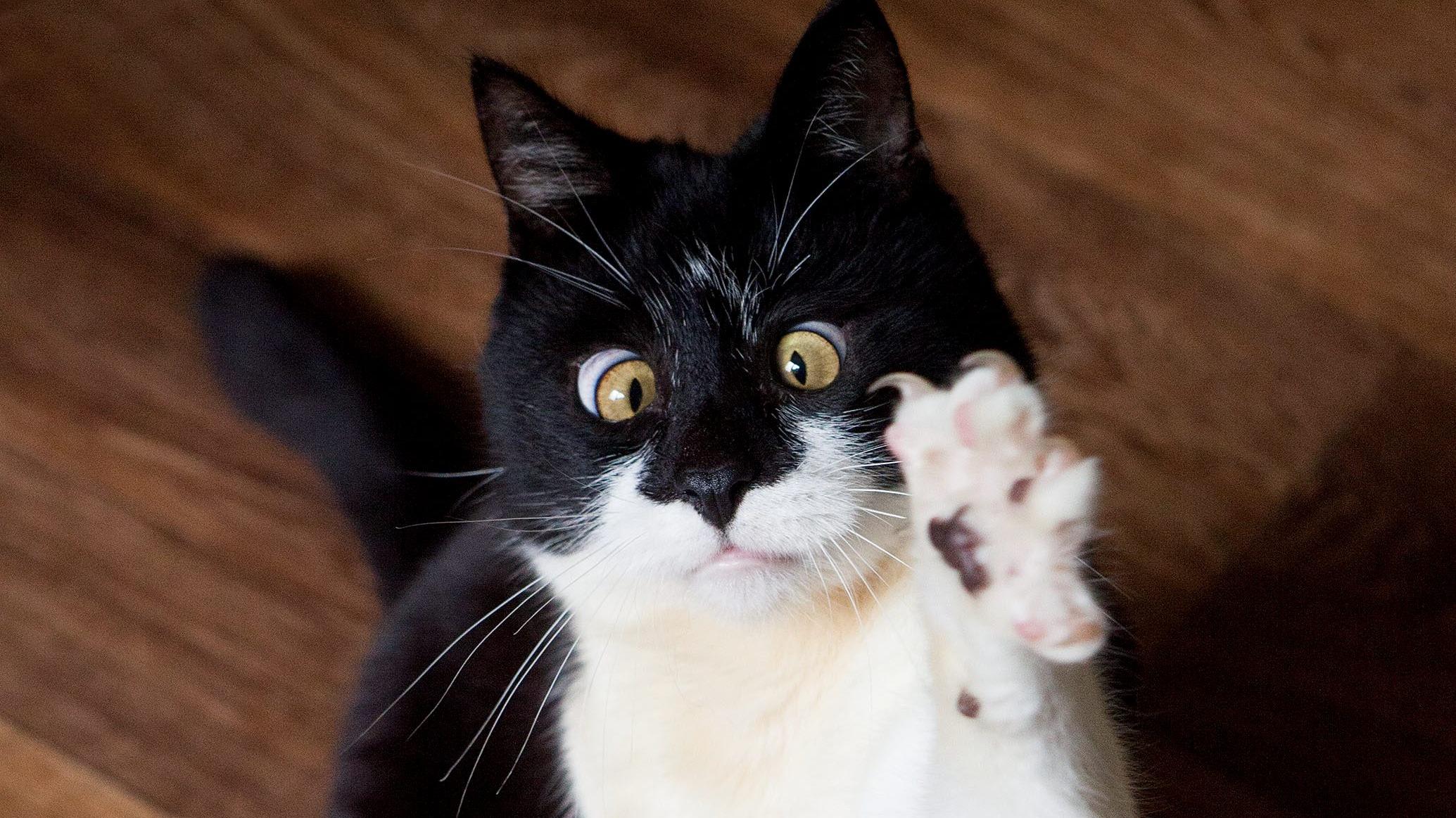 Gatti strabici: ecco spangles, jarvis e ozzy, pet influencer del web!