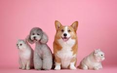 Pet food naturale: come alimentare i pelosi di casa