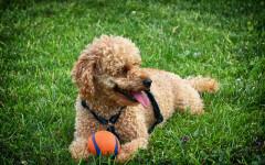 Crescita del cane: le fasi da cucciolo ad adolescente